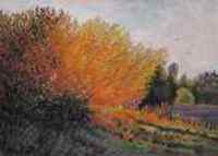 Orange Willows